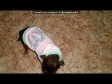 «Собака-бабака и кошка-бабошка» под музыку Кошка-бошка и Собака-Улыбака - Такая песня смешная, зайка, как будто специально про нас =))) люблю тебя!!!!!!!)). Picrolla